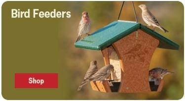Click to view Bird Food products