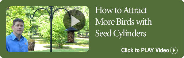 Attract More Birds with Seed Cylinders